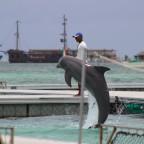 Los delfines, sus besos y cómo se ven en Punta Cana